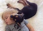 El pequeño Beau duerme la siesta junto a su perro