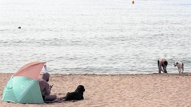 Temporada de verano canina