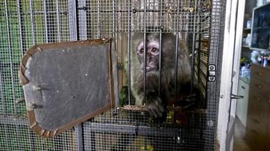 L'últim mico