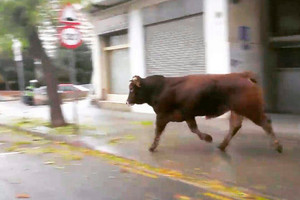 toro-matar