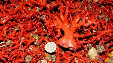 SOS por los corales de Catalunya