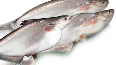 ¿Què és el panga? 4 claus sobre un peix polèmic