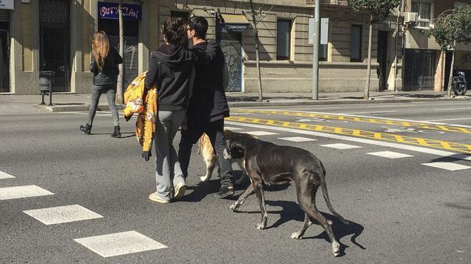 Los vecionos de Barcelona opinan sobre el decreto que en 2018 prohibirá llevar los perros desatados en la vía pública.