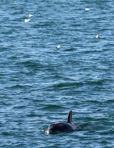 Localizados cuatro delfines en el interior del Puerto de Barcelona