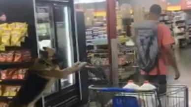 Un perro lleva el carrito de la compra en el súper