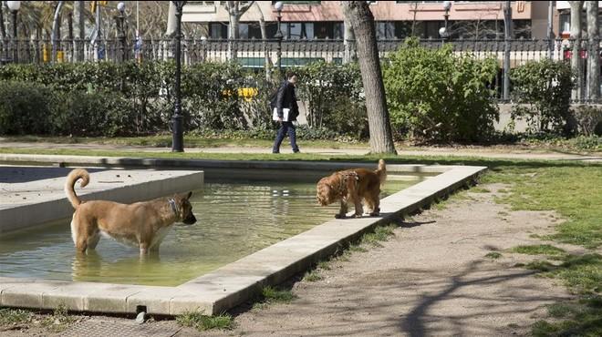 Unos perros sueltos en el parque de la Ciutadella