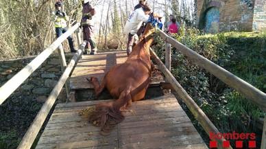 Els Bombers rescaten un cavall atrapat en un pont a Bescanó