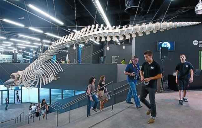 La ballena de BCN estrena una nueva vida en el Fòrum