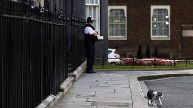 Cameron marxa, però el gat Larry es queda