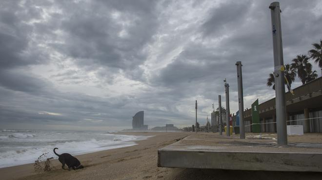 Des de Pineda i Malgrat de Mar fins a la Barceloneta, les platges arrasades pel temporal de mar.
