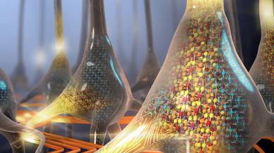 Científicos de IBM reproducen el funcionamiento neuronal