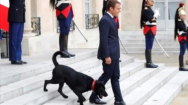 Los Macron adoptan un perro, 'Nemo'