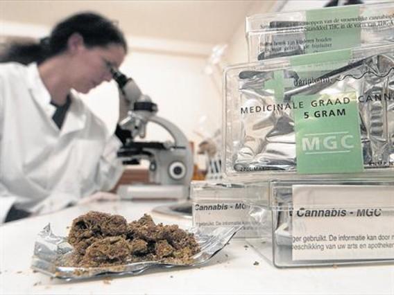 Salut regulará el uso del cannabis con finalidades terapéuticas
