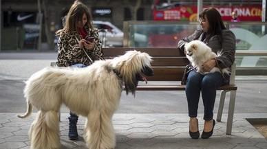 Cuatro de cada 10 hogares españoles tiene una mascota