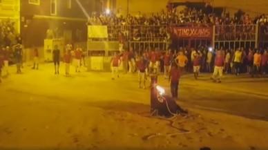 Mor un toro embolat després d'encendre-li les torxes a la localitat valenciana de Foios