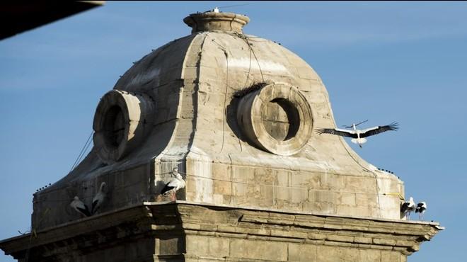 Cig�e�as en la catedral de Lleida, a principios de febrero. En el edificiohabita de forma permanente una nutrida colonia.