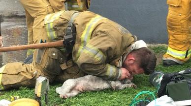 Un bomber salva un gos fent-li el boca a boca durant 20 minuts