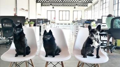 Tres perros bien asentados,en laoficina deThe Mamas� Agency.