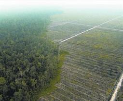 DENUNCIA Deforestación en Suamtra para una plantación de aceite de palma.