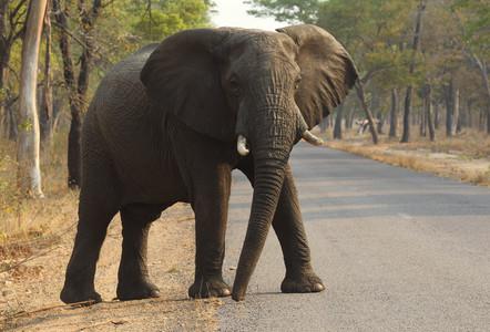Un elefante cruza la carretera en el Parque Nacional de Hwange, en Zimbabue, en el2015.