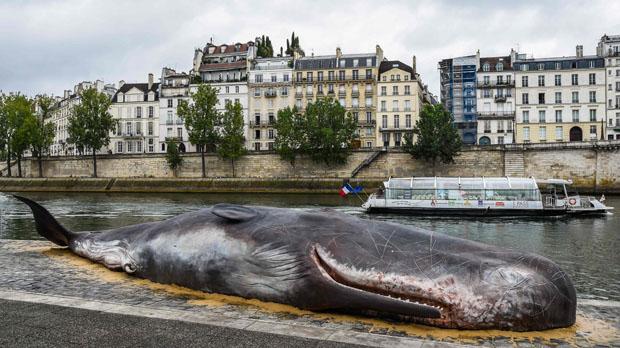 ¿Una ballena en el Sena de París?