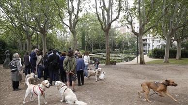Gos menja gos i altres desordres canins al Turó Park