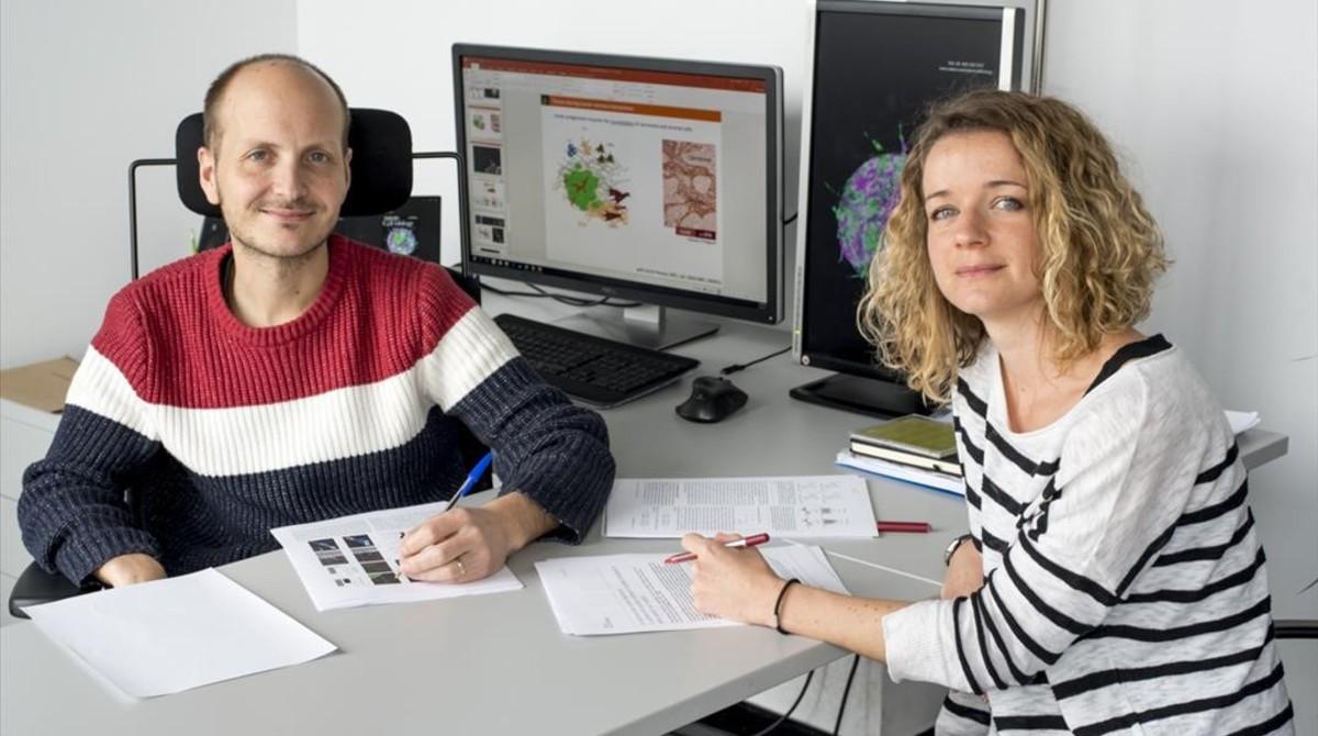 Las células tumorales 'secuestran' células sanas para iniciar la metástasis