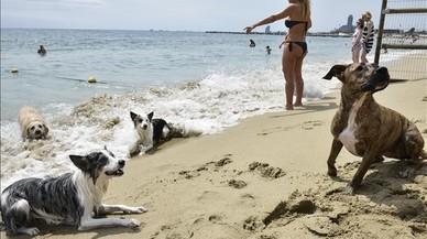 La peque�a zona de la playa de Llevant habilitada para los perros.