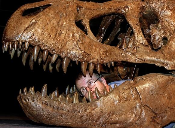 Argentina: descubren un yacimiento de fósiles con especies desconocidas