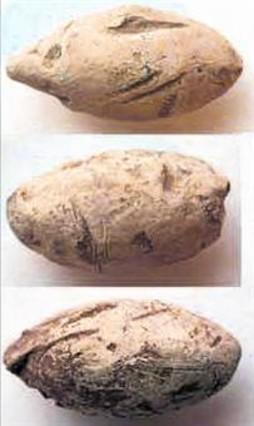 Proyectiles de plomo para lanzar con honda encontrados en el transcurso de la excavación.