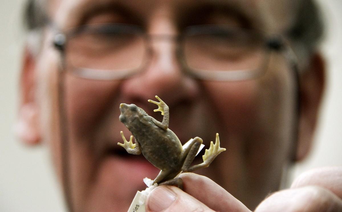 Un biólogo descubre una rana y la bautiza con el nombre de FARC.