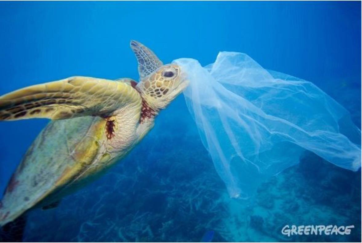 Resultado de imagen de peces comiendo plástico