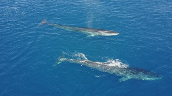 Las ballenas se exhiben en la costa del Garraf