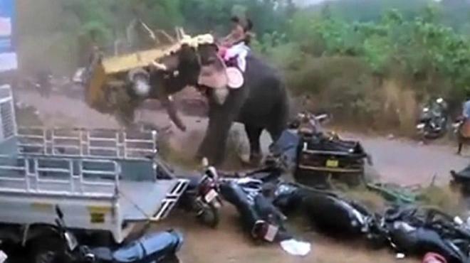 Un elefante enfuerecido destroza decenas de coches en la India.