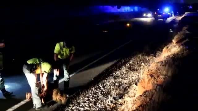 Mor un ciclista a Palma al ser atropellat per una conductora èbria