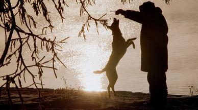 Rusia multará a los perros y gatos que ladren y maúllen en horas de descanso