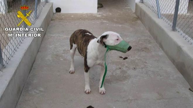 Un home mor per l'atac de cinc gossos de raça perillosa.