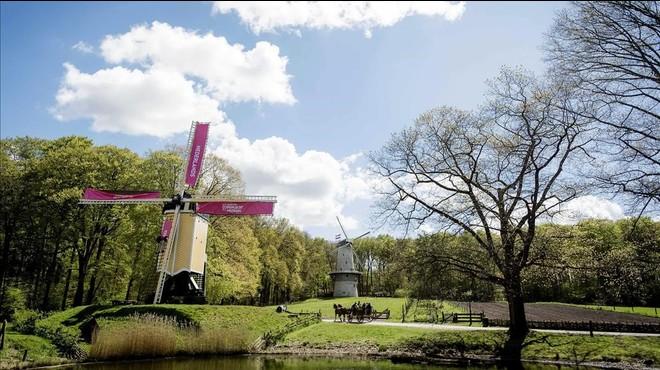 Los viejos molinos holandeses, decorados en rosa, en homenaje a la salida del Giro.