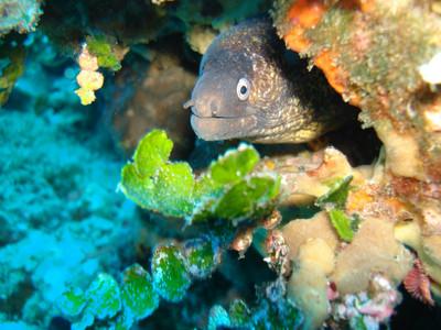 Una morena, en el fondo marino de El Vendrell.