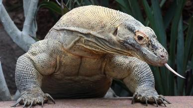 ¿Dónde está el Parque Nacional de Komodo? Así vive el lagarto más grande del planeta