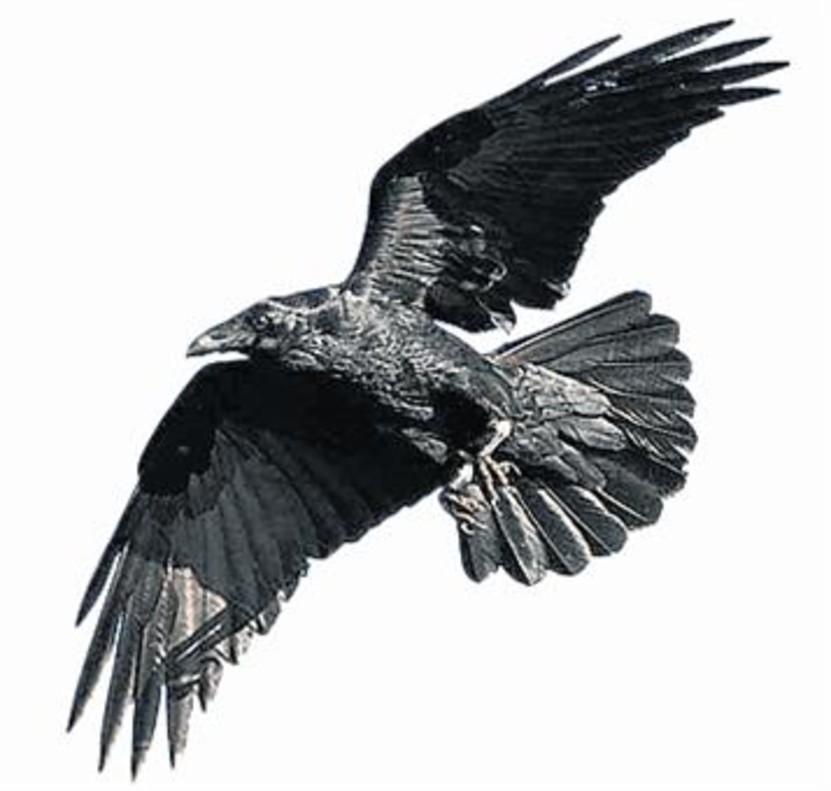 Historias naturales: pájaros listos y otras hierbas