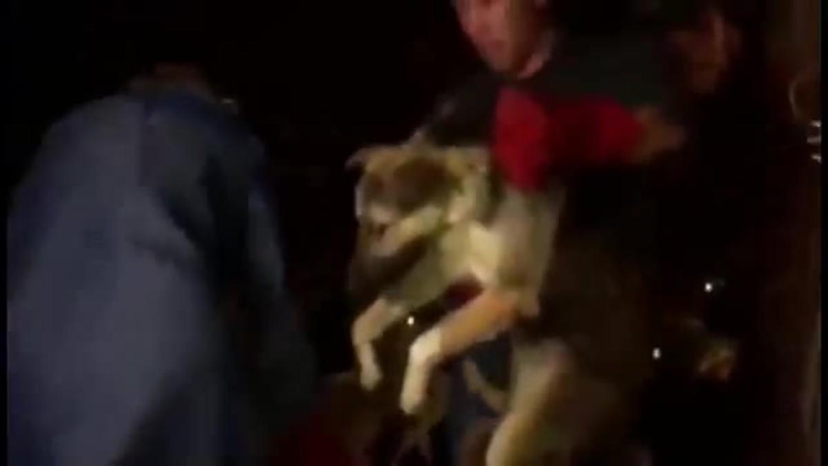 Perros siendo liberados antes del festival de Yulin.