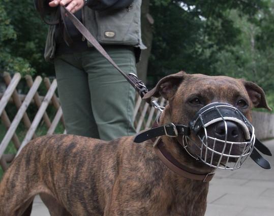 Multats cinc propietaris de gossos perillosos per portar-los sense morri�