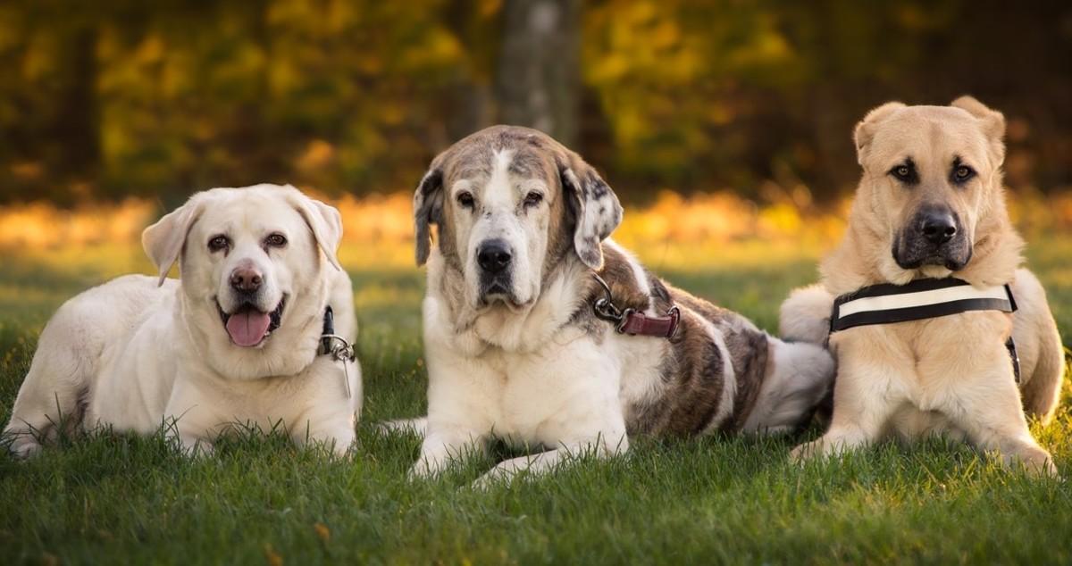 Los perros pueden reconocer su propio olor, por ejemplo a través de la orina.