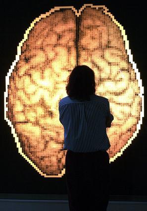 Adiós al cerebro femenino