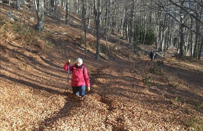 Una catifa de fulles seques al Montseny