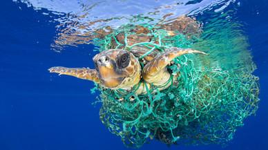 La pesca de la gambeta, la principal amenaça de les tortugues marines