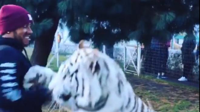 Lewis Hamilton juega con un gran tigre blanco en una fundación que rescata animales en México.