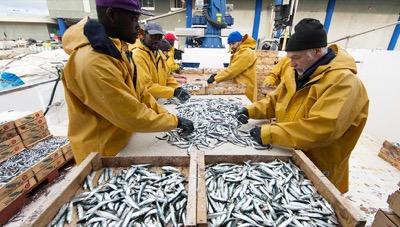Pesca comprometida