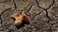 El presidente de Zimbabue declara la condici�n de desastre natural